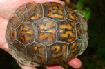 Carapace of Turtle at Monte Sano State Park in Alabama